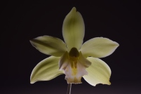 Orchid ss1.80 f5.6 iso200